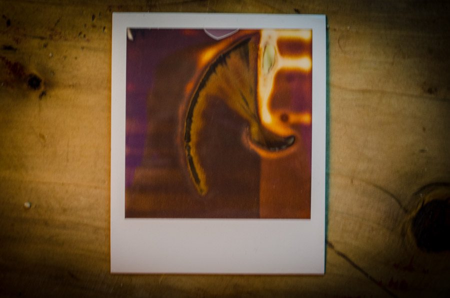 the bacon polaroids-0016