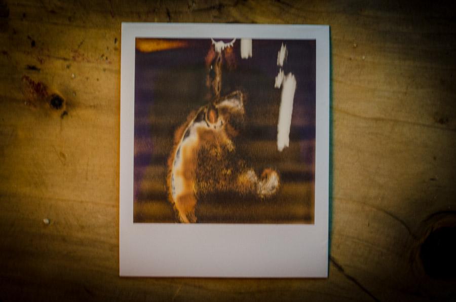 Polaroids made for Radio
